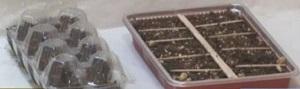 卵パックと普通のパックで種まき