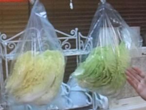 白菜を緑菜に