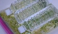 乳酸菌キャベツ