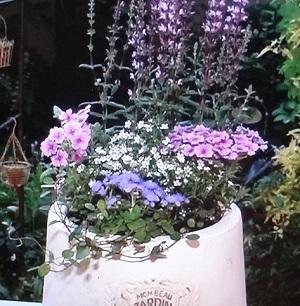ガーデニング、寄せ植え、花