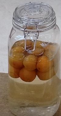 生梅の炭酸シロップ