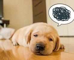 犬、疲れ、ストレス