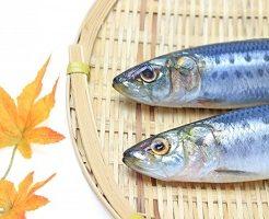 魚、イワシ、いわし