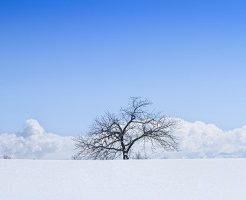 北海道、雪