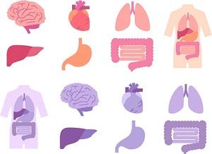 体、肝臓、心臓超、胃