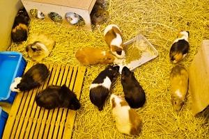 ネズミ モーニング ショー